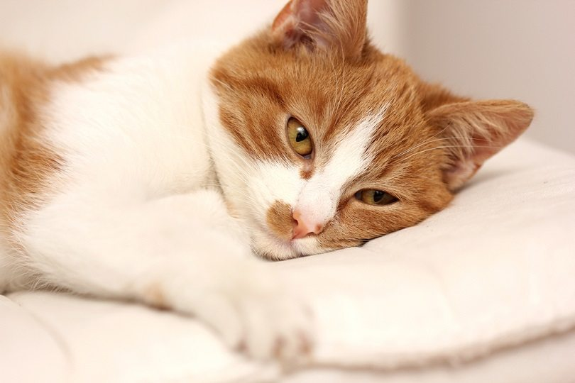 tired sick cat_natata_shutterstock