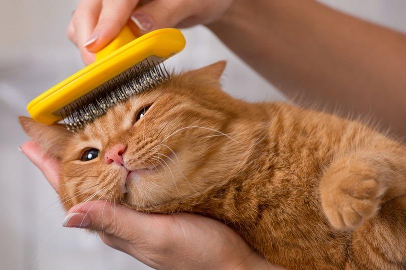 woman combing her cat