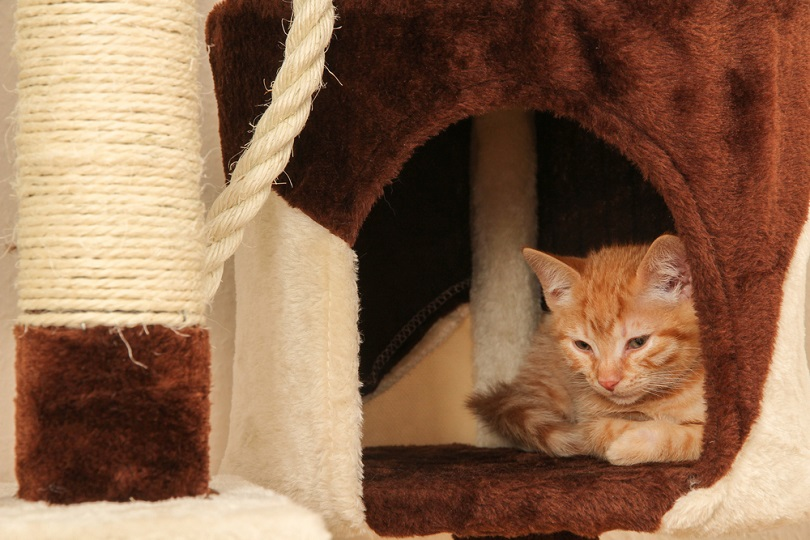 young kitten in the cave of a cat tree