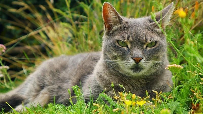 10spitefulcat