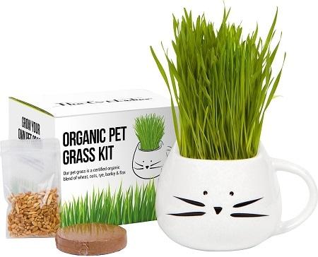 3The Cat Ladies Organic Pet Grass Grow Kit with Planter