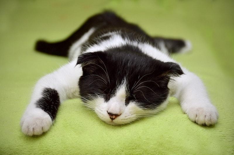 4lazy cat