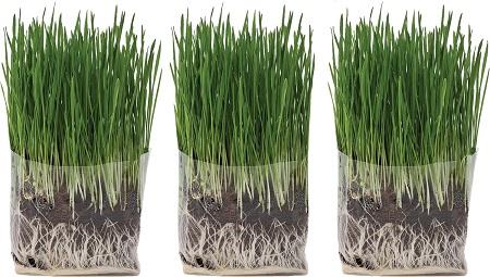 5The Cat Ladies Organic Pet Compostable Grass Grow Kit
