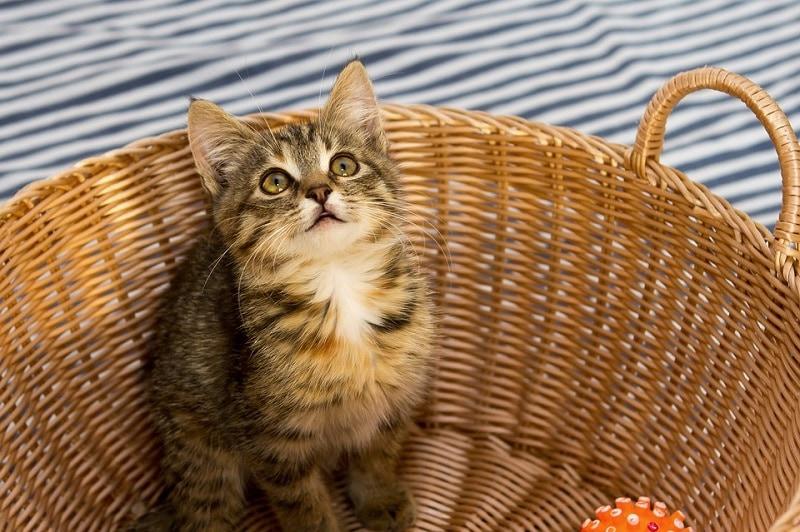 7darling cat