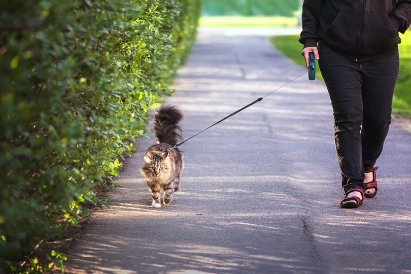 A woman with a cat on a leash walking along a path in the park