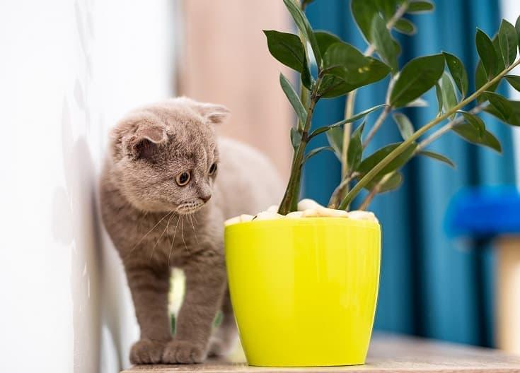 Cat and plants_shutterstock_Stenko Vlad
