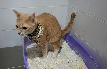 Constipated Cat_shutterstock_RJ22