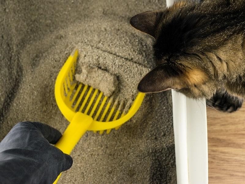 Flushable Cat Litter Scooping_shutterstock_gaikova
