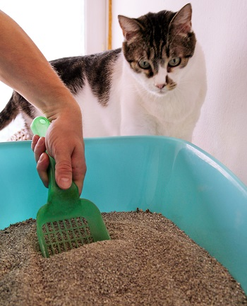 Flushable Cat Litter_shutterstock_Zoran Photographer