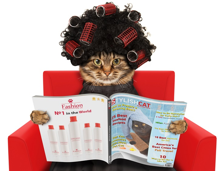 Funny cat at the hairdresser