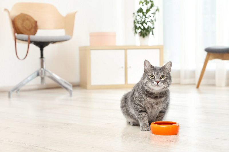 Indoor Cat Near Food Bowl_shutterstock_New Africa