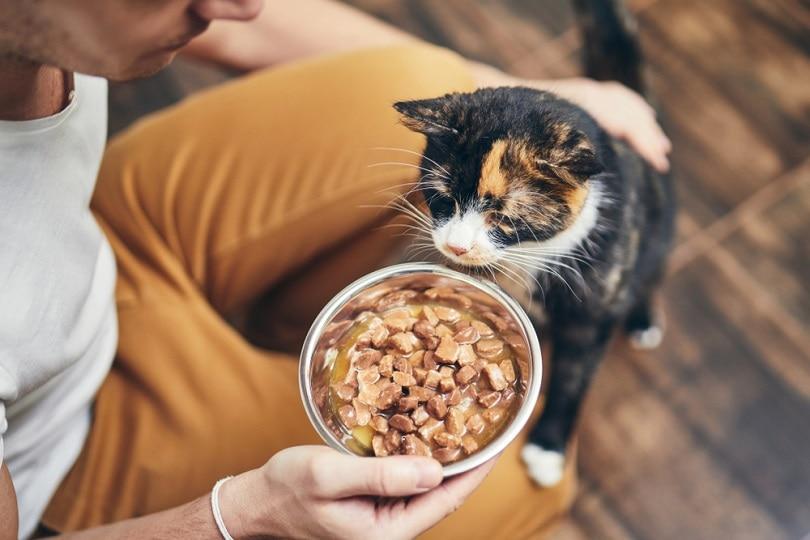 a man feeding his domestic cat