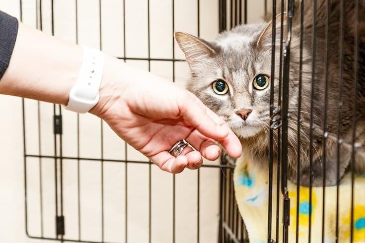 adopting a cat_shutterstock_Susan Schmitz