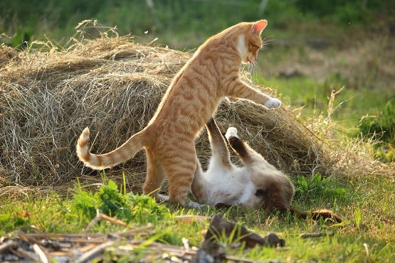 catfighting