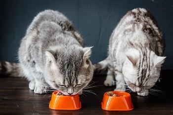 cats eating_shutterstock_Sharaf Maksumov