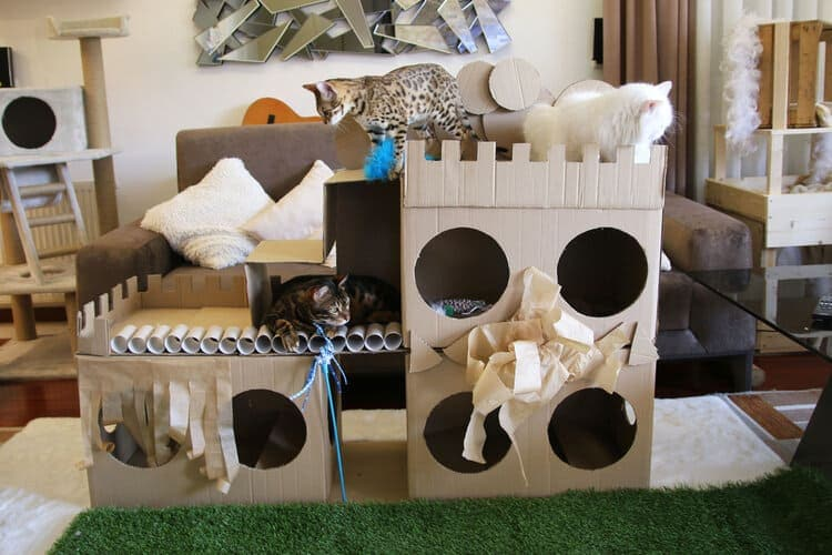 cats in cardboard playhouse
