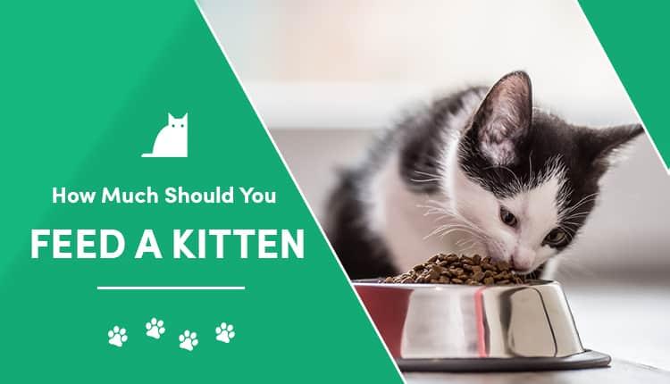 feed a kitten