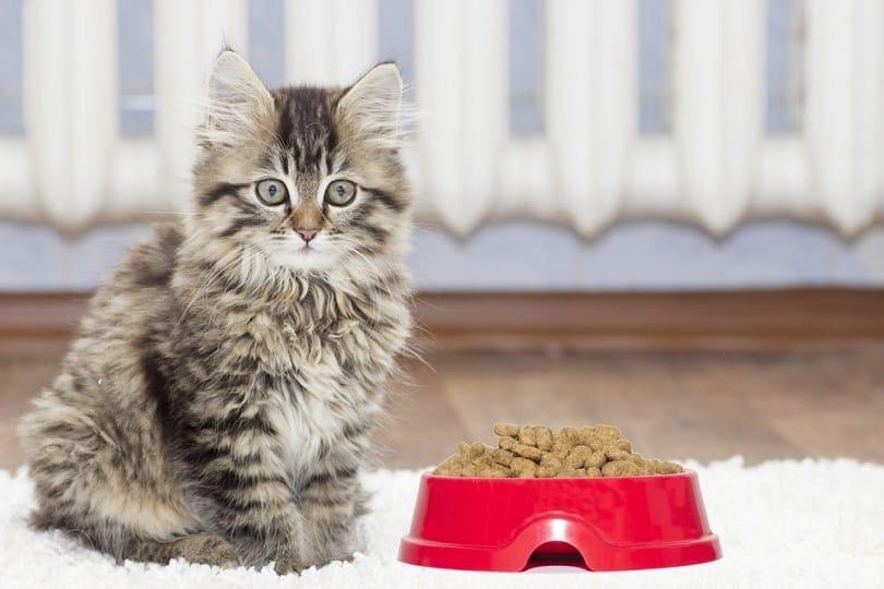 kitten _Happy monkey_Shutterstock
