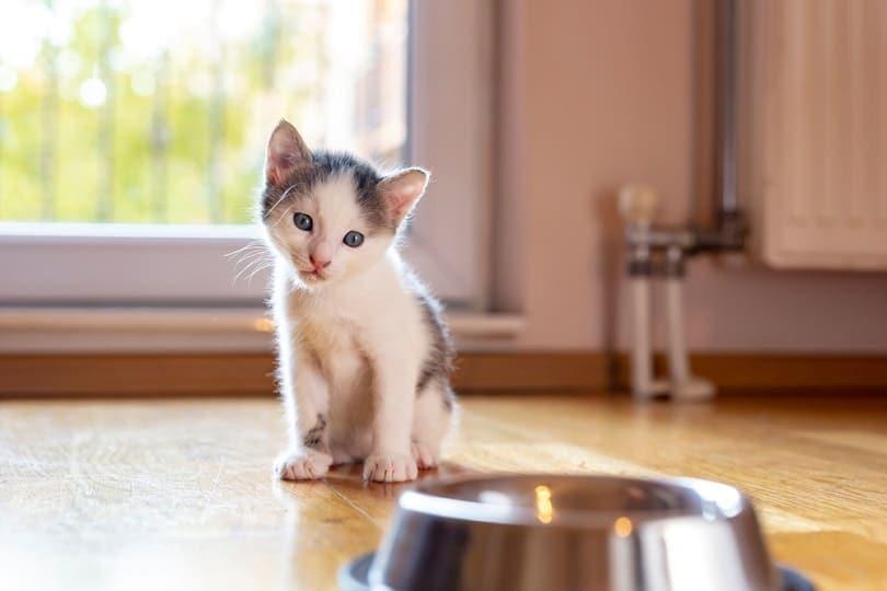 little kitten sitting by a bowl of milk
