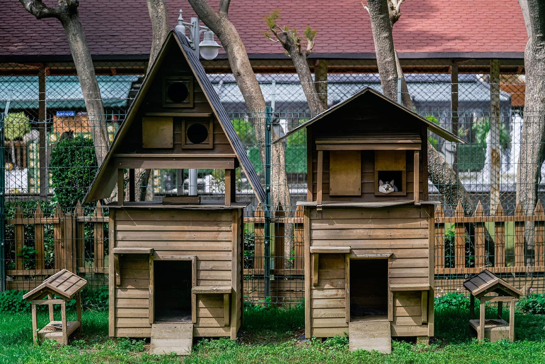 wooden cat houses