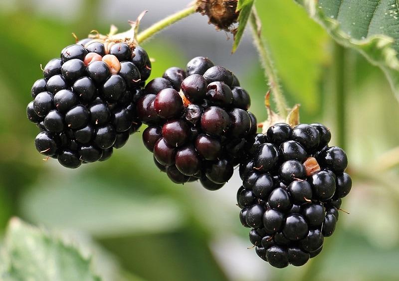 3 Black Berries