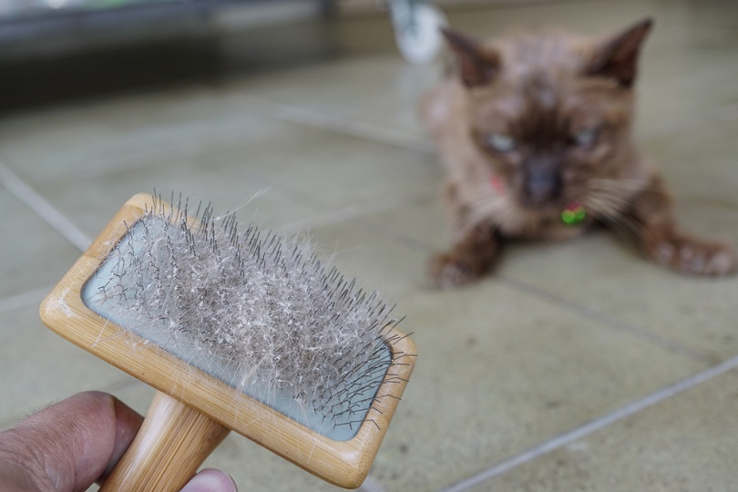 Cat skin and hair on brush_photong_shutterstock