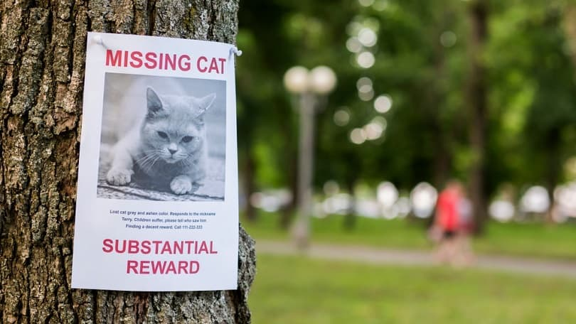 Leaflet with information about the missing cat