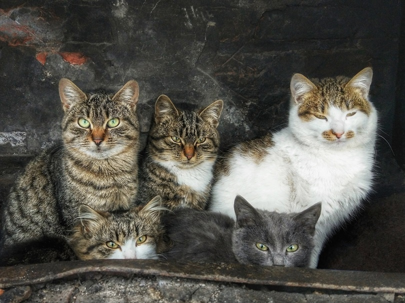 a group of tabby cats