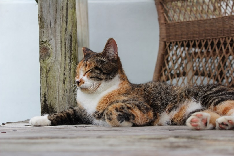 a patched tabby cat lying outdoors