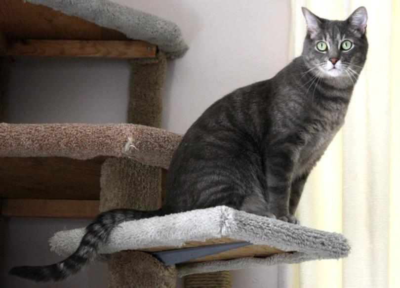 black tabby cat on a catio