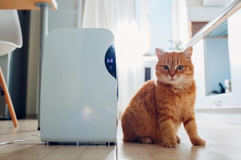 cat Dehumidifier_mariia boiko_shutterstock