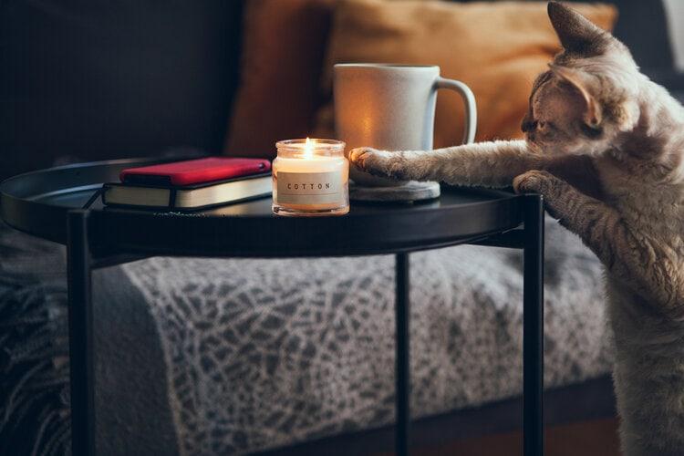 cat grabbing candle