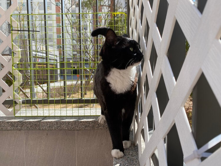 cat looking through lattice