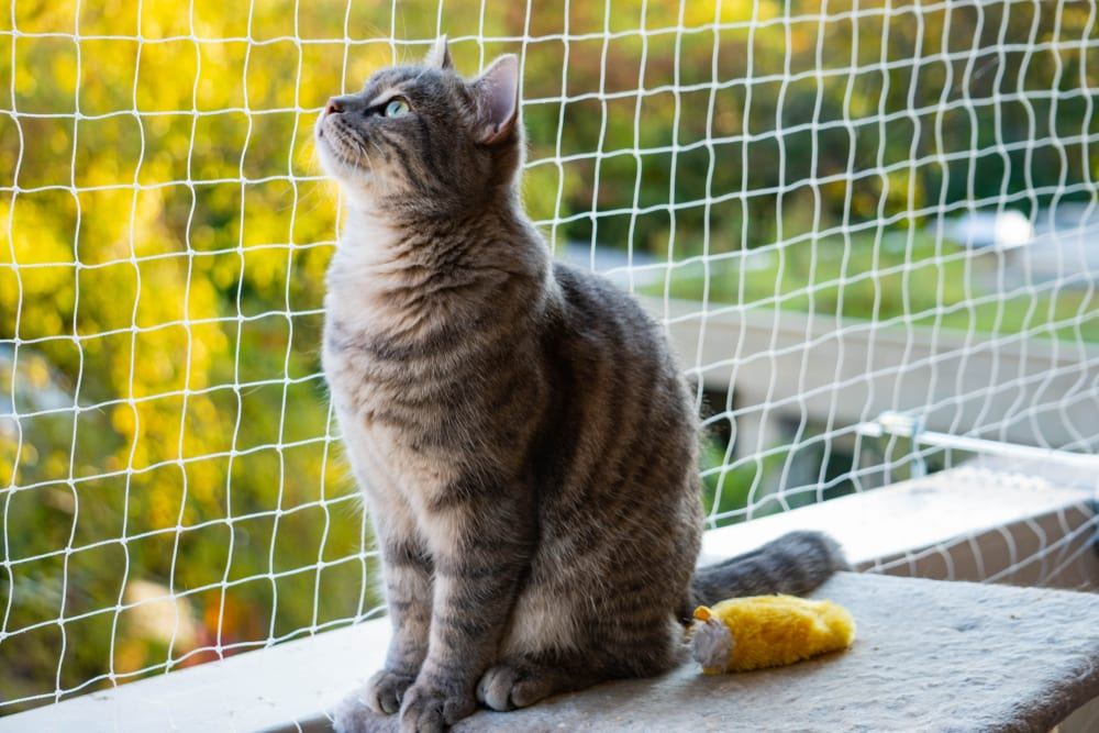 cat on netted balcony