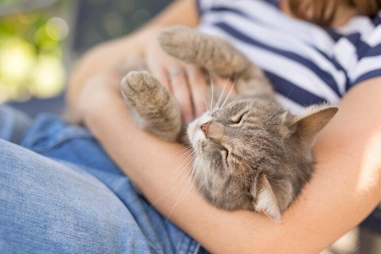 cat on womans lap