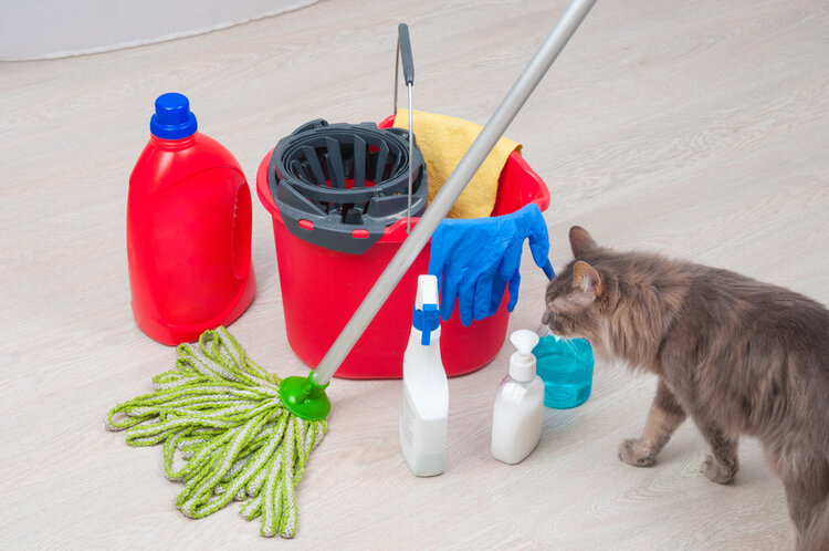 cat sniffing chemicals