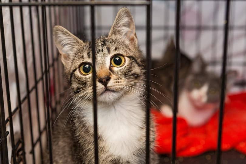 kittens in a cage of a shelter