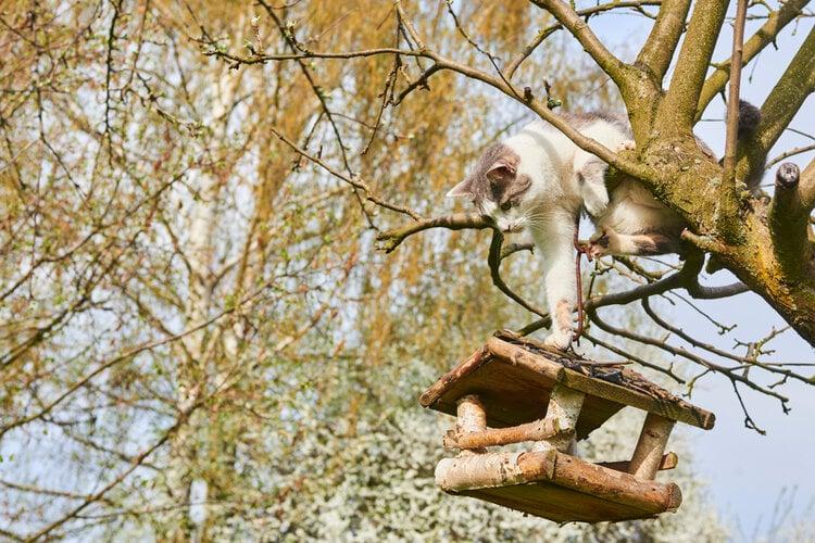 cat swipping bird house