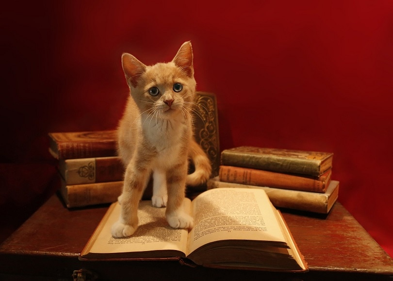 tabby kitten standing on the book at the desk