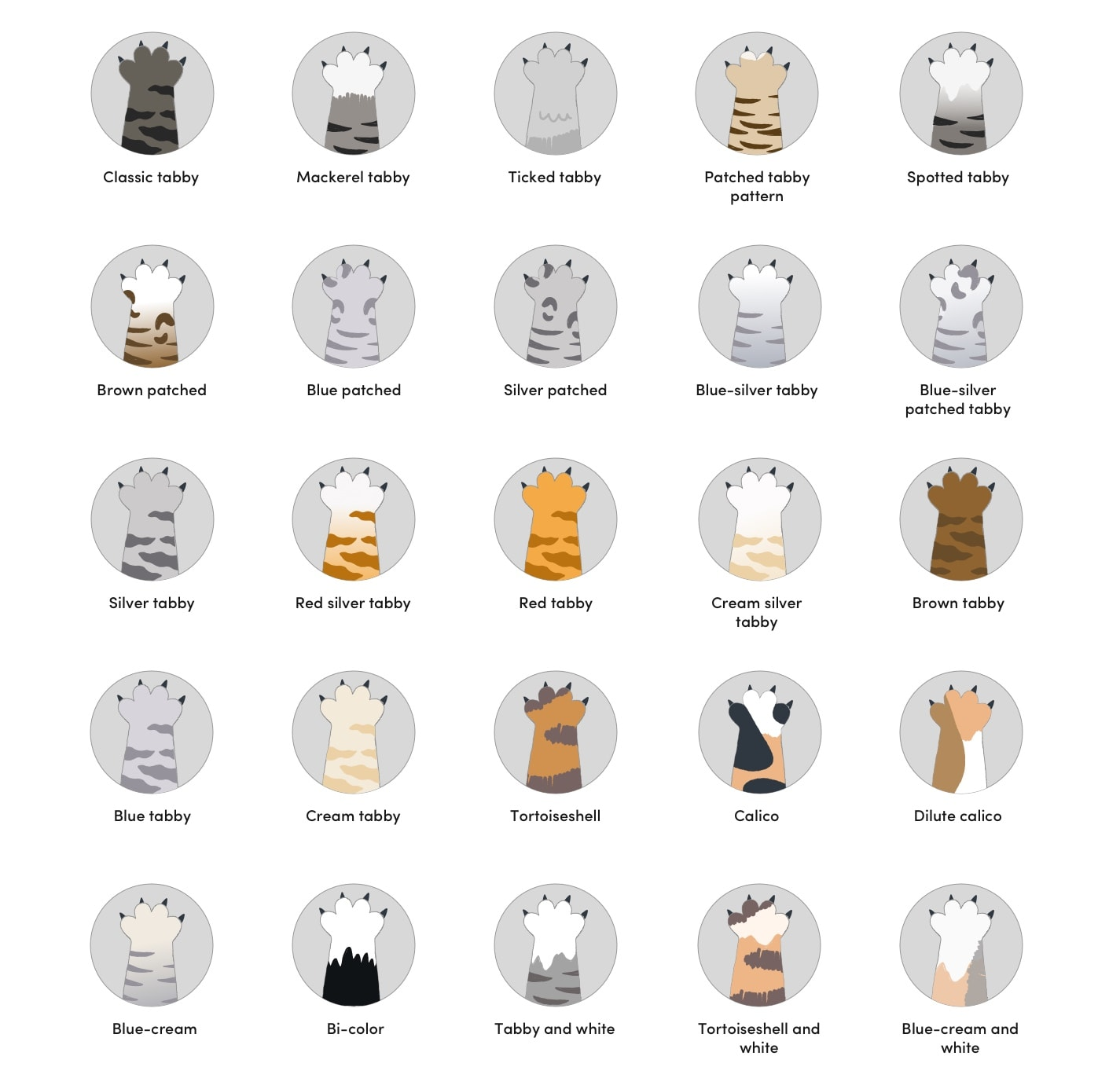 42 Manx Cat Colors & Patterns 2