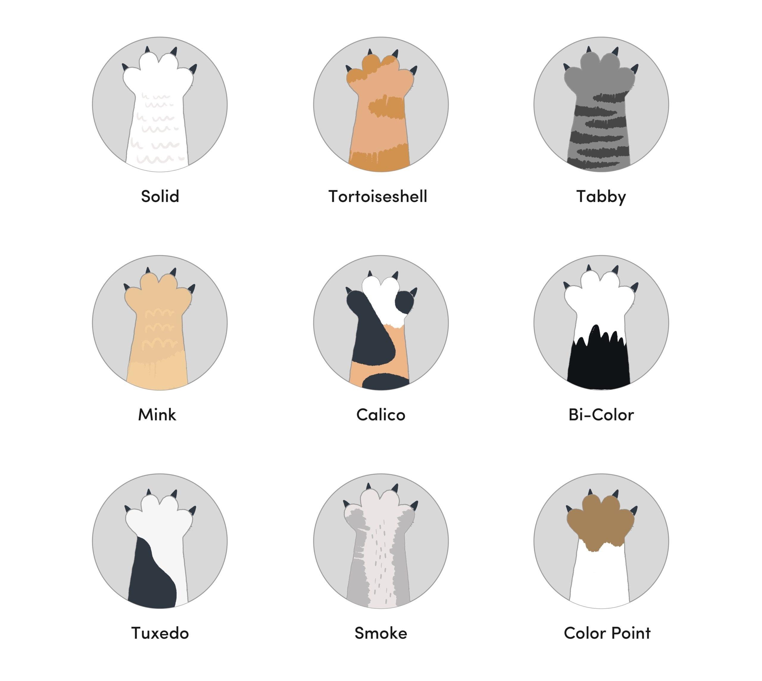 9 Ragamuffin Cat Colors & Patterns