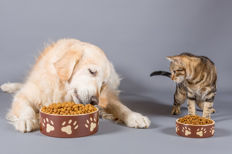 Dog and cat eating dry food_135pixels_shutterstock
