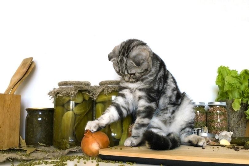 Scottish fold silver tabby kitten near onion_OlgaBartashevich_shutterstock