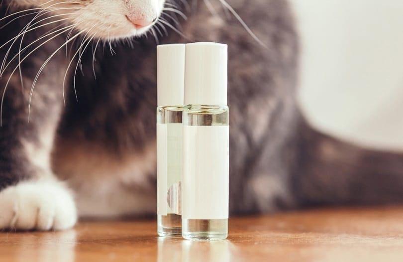 cat sniffs perfume bottles with oil_fantom_rd_shutterstock