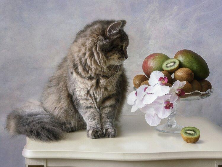 cat with kiwi