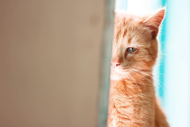 crying-cat_Shutterstock_arvitalyaart