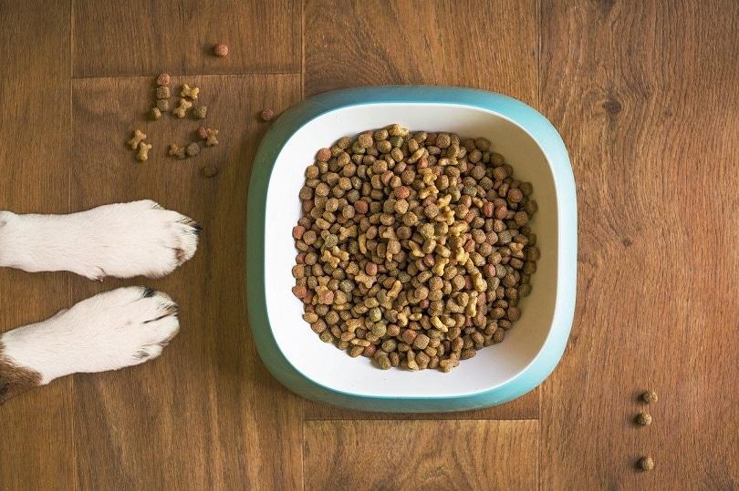 dog-food-pixabay