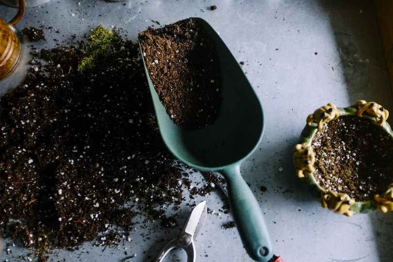 gardening soil with cat litter