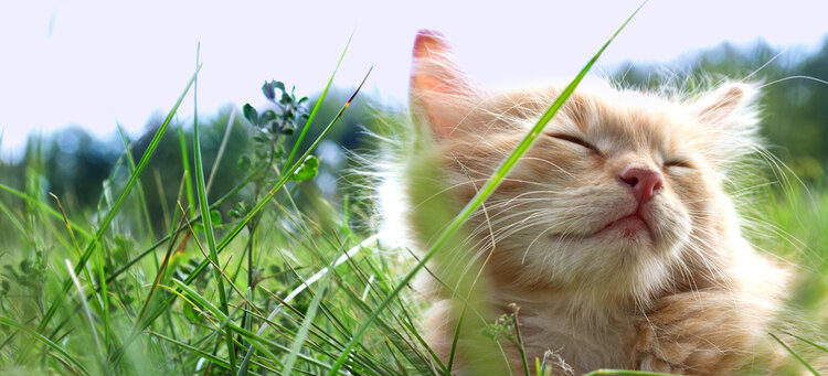 relaxed kitten in grass