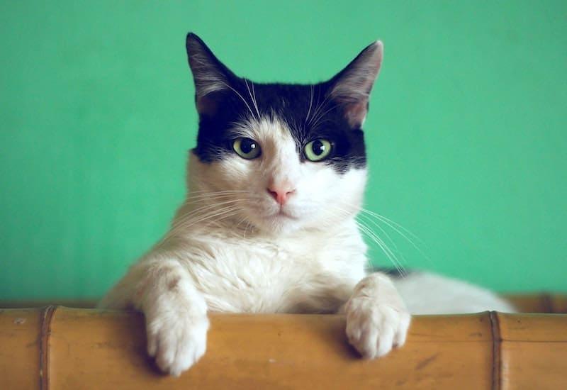 skeptical cat